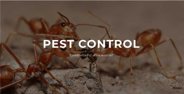 One Way Pest Control